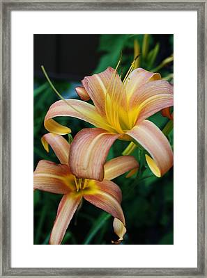 Twin Daylilies Framed Print by Bruce Bley