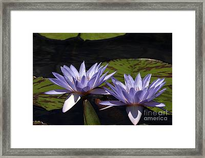 Twin Lavender Tropical Waterlilies Framed Print by Byron Varvarigos
