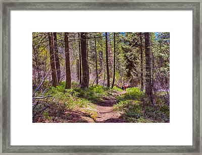Twisp River Trail Framed Print by Omaste Witkowski
