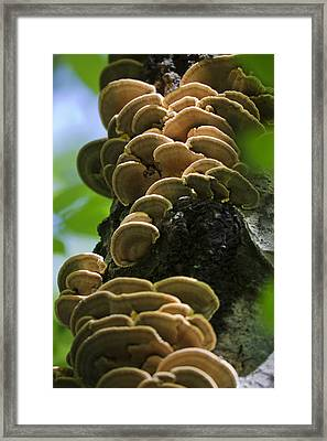 Twist Of Shrooms Framed Print by Christina Rollo