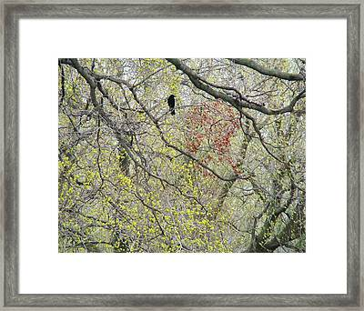 Twisted Branches Framed Print by Gothicrow Images