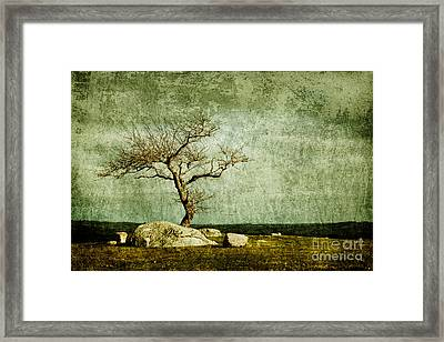 Twisted Elegance Framed Print by Andrew Paranavitana