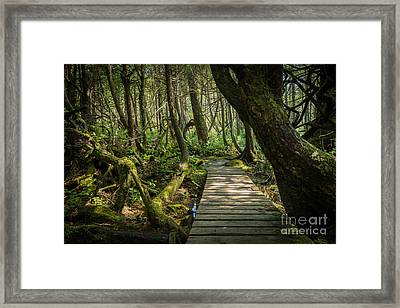 Twisted Forest Framed Print by Carrie Cole