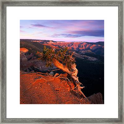 Twisted Forest Framed Print by Leland D Howard