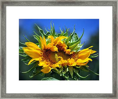 Twisted Sunflower Framed Print by Gail Butler