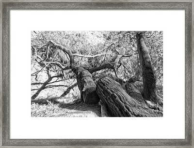 Twisted Tree - 03 Framed Print by Gregory Dyer