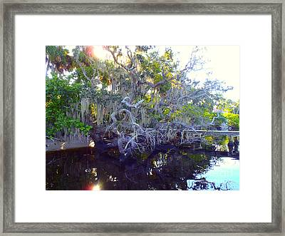 Twisted Tree Framed Print by Carey Chen