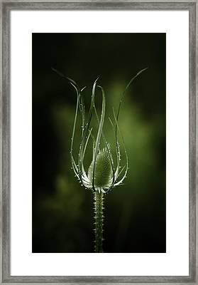 Twisting Beauty Framed Print by Shane Holsclaw