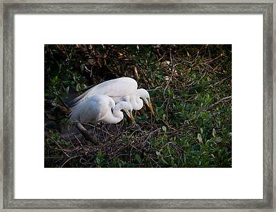 Two Beaks Framed Print by Linda Olsen