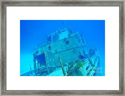Two Blue Tang On A Ship Wreak Framed Print by John Malone