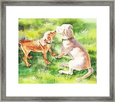Two Brothers Labradors Framed Print by Irina Sztukowski