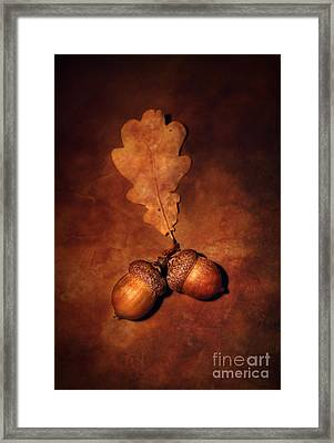 Two Brown Acorns Framed Print by Jaroslaw Blaminsky