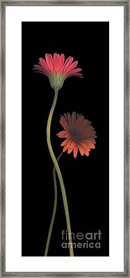 Two Daisies Tall Right Framed Print by Heather Kirk