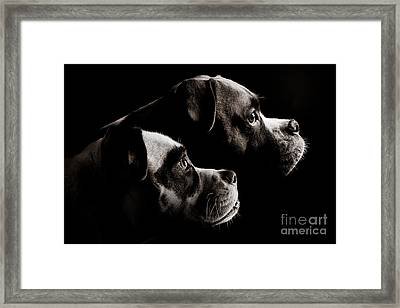 Two Dogs Framed Print by Jt PhotoDesign