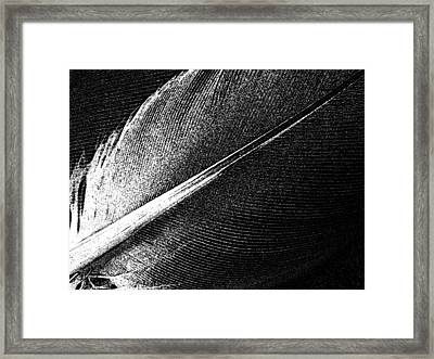 Two Feathers Framed Print by Chris Berry