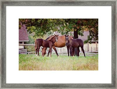 Two Foals Framed Print by Donna Doherty