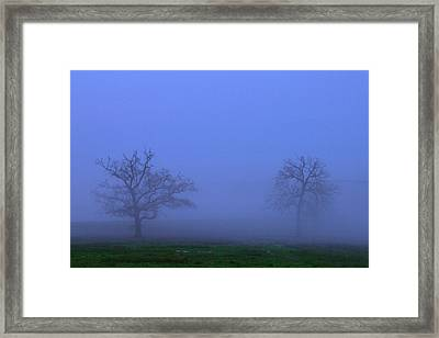 Two Foggy Trees Framed Print by Brian Harig