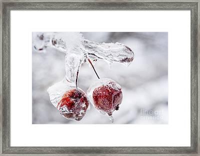 Two Frozen Crab Apples  Framed Print by Elena Elisseeva