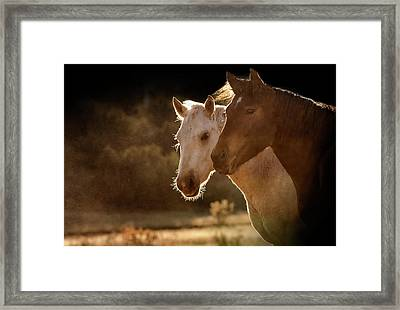 Two Horse Portraits In Soft Backlight Framed Print by Sheila Haddad