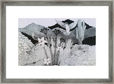 Two Hummingbirds In Arizona Framed Print by Tammie Temple