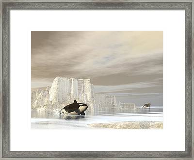 Two Killer Whales Swimming Framed Print by Elena Duvernay