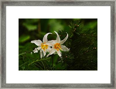 Two Lilies Framed Print by Jeff Swan