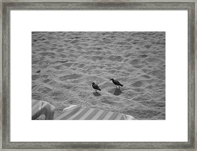 Two Little Birds On The Beach  Framed Print by Shaun Maclellan