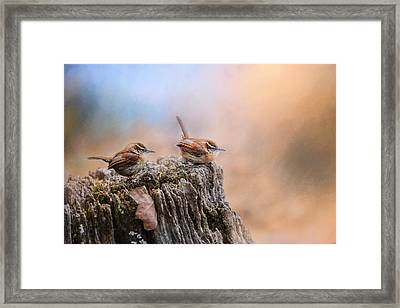 Two Little Wrens Framed Print by Jai Johnson