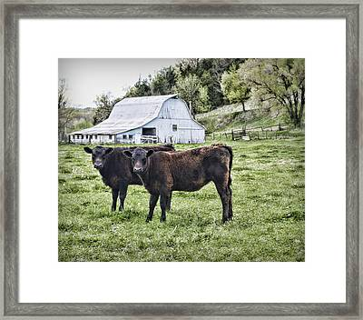 Two Of A Kind Framed Print by Cricket Hackmann