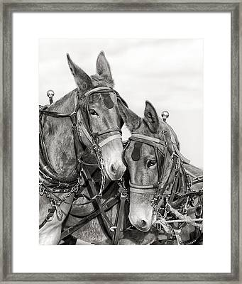 Two Of A Kind Framed Print by Ron  McGinnis