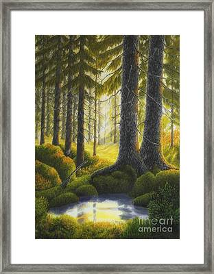 Two Old Spruce Framed Print by Veikko Suikkanen