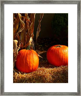 Two Pumpkins Framed Print by Yvette Radcliffe