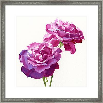 Two Red Violet Rose Blossoms Square Design Framed Print by Sharon Freeman