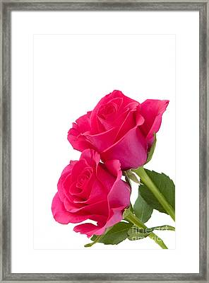 Two Roses Framed Print by Anne Gilbert