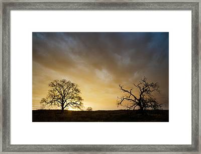 Two Trees Greeting The Sun Framed Print by Robert Woodward
