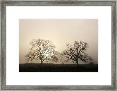 Two Trees In Fog Framed Print by Robert Woodward
