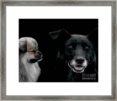 Two Types Of Mutts Framed Print by Nola Lee Kelsey