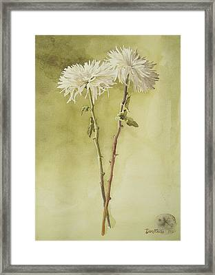 Two White Mums Framed Print by Kathryn Donatelli