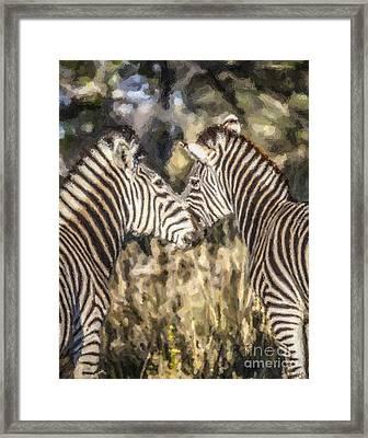 Two Zebras Equus Quagga Nuzzlling Framed Print by Liz Leyden