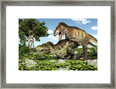 Tyrannosaurs Mating Framed Print by Roger Harris