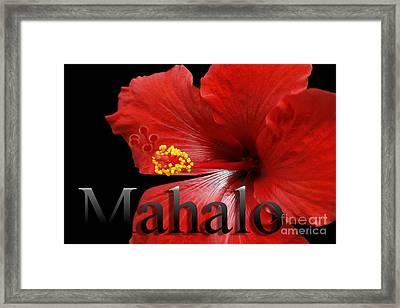 Ula Anoano Hanohano Red Tropical Hibiscus Mahalo Framed Print by Sharon Mau