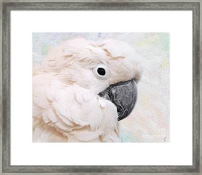 Umbrella Cockatoo Framed Print by Jai Johnson