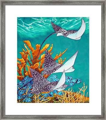 Under The Bahamian Sea Framed Print by Daniel Jean-Baptiste