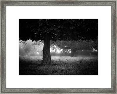 Under The Dark Canopy Framed Print by Chris Fletcher