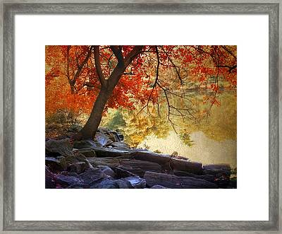 Under The Maple Framed Print by Jessica Jenney