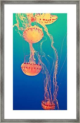 Under The Sea Framed Print by Lynsie Petig