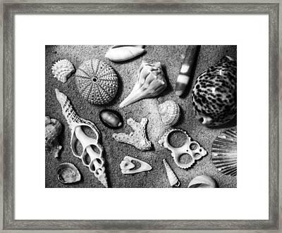 Under The Sea Framed Print by Tom Druin