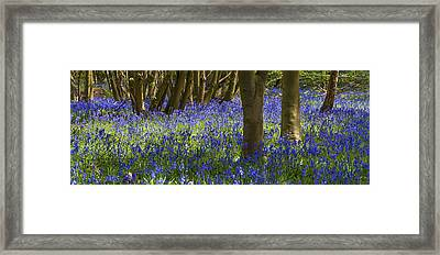 Underneath The Trees Framed Print by Svetlana Sewell