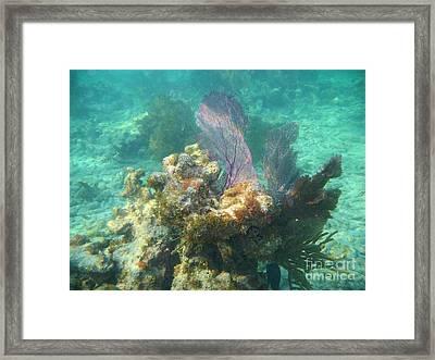 Undersea Fans Framed Print by Adam Jewell