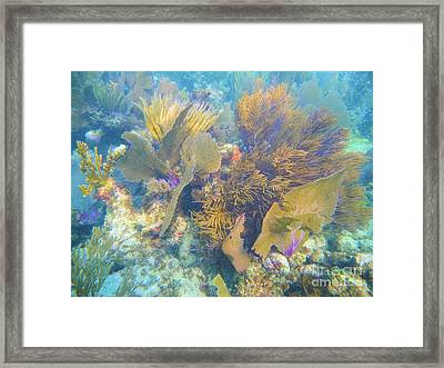 Undersea Forest Framed Print by Adam Jewell